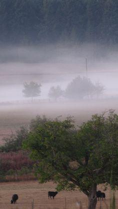 Misty Morning, Duncan, BC