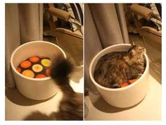 DIY cat bed - a planter and a cushion