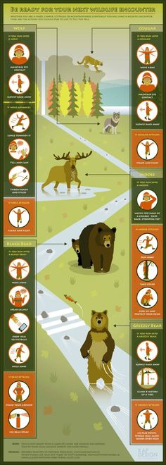 collection of camping infographics - wildlife encounter