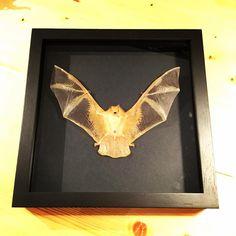 #bat #interiordesign #art #taxidermyart Fancy, Bats, Interior Design, Frame, Instagram, Home Decor, Schmuck, Nest Design, Picture Frame