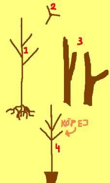 Planteringsråd