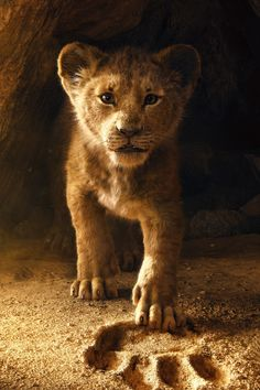 For Everyone Who Thought Disney's Lion King Remake Was Going to Be Live-Action . . .