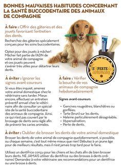 Bonnes mauvaises habitudes concernant la santé buccodentaire des animaux de compagnie #animaux #santébuccodentaire #dentaire #ExperteAnimauxTG