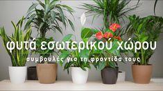 Όλοι λατρεύουμε να έχουμε φυτά μέσα στο σπίτι και στο γραφείο, όμως μερικές φορές φοβόμαστε πως δεν θα καταφέρουμε να τα κρατήσουμε για πολύ καιρό. Στο καινούργιο μας βίντεο παρουσιάζουμε τις πιο χρήσιμες συμβουλές για τη φροντίδα των φυτών εσωτερικού χώρου και με ποιους τρόπους μπορούμε να τα διατηρήσουμε υγιή και καταπράσινα.