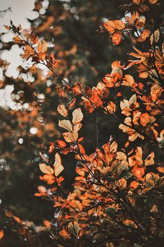 Fall leaves – Best Home Plants Halloween Hacks, Wallpeper Tumblr, Iphone Wallpaper Herbst, October Wallpaper, Fall Background, Autumn Scenery, Autumn Cozy, Autumn Fall, Autumn Aesthetic