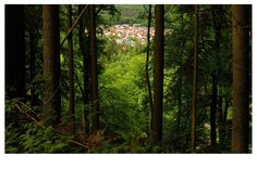 Germany Nature / Montclair in Mettlach by M. Eye Photography, Germany, Nature, Plants, Naturaleza, Deutsch, Plant, Off Grid, Natural