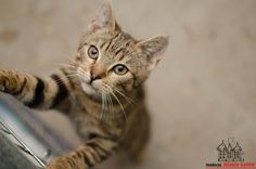 Ptyś is looking for a home #cute #cutecats #cats #caturday #kot #koty #neko #gato #katz #katzen #kittens #chat