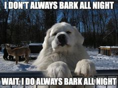 Great Pyrenees Barking Meme