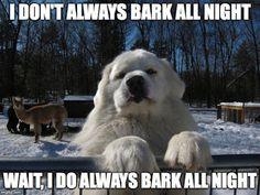 Great Pyrenees Barking Meme