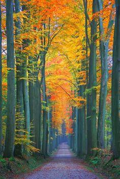 Foret de Soignes / The Sonian Forest - Brussels, Belgium
