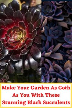Make Your Garden As Goth As You With These Stunning Black Succulents Cute Hand Tattoos, Finger Tattoos, Baby Shower Balloons, Birthday Balloons, Black Succulents, Acrylic Nails Coffin Pink, Brown Matte Lipstick, Airbrush Nails, Cute Living Room