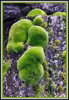 First Moss