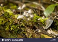 Image result for forest floor fungi