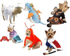 Spooky & Cute Halloween Pet Sale: Costumes, Shirts & Accessories 60% OFF
