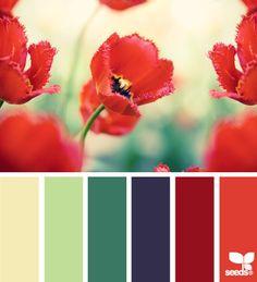 Samarkand and colourways for UZebekistan.. Oriental Poppy