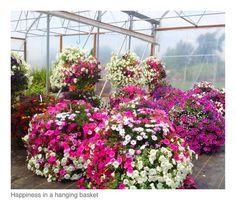 Summer flower baskets Oregon