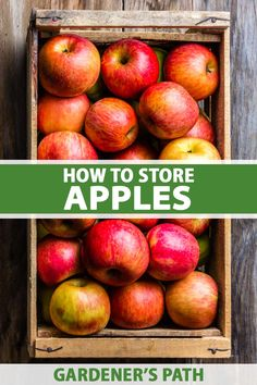 Do you have a bumper crop of apples this fall? You'll want to put some of your harvest up for storage, either fresh or as preserves. The fresh fruits will keep their delicious flavors and perfect textures for months when stored the right way. Learn how to store apples on Gardener's Path. #apples #storage #gardenerspath How To Store Apples, Love The Earth, Apple Harvest, Fruit Trees, Sustainable Living, The Fresh, Fresh Fruit, Preserves, Eco Friendly