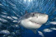 Negotiations to tame marine Wild West begin : Nature News & Comment