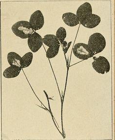 (PUBLIC DOMAIN IMAGE - free to use!) Title: Acta Soc. pro Fauna et Flora Fennica Identifier