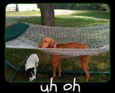 Uh Oh | Funny Pictures animals.  Pet time out!!!!