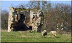 Dans l'Indre, le fantôme du château de Vouhet trône fièrement dans son écrin de verdure. Curieusement, après avoir gardé les hommes durant plusieurs siècles, la ruine est surveillée au 21ème siècle par les brebis.