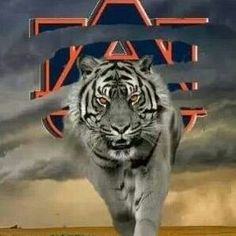 There's a storm brewing on the plains! Football War, Auburn Football, College Football Teams, Auburn Tigers, Clemson, Alabama Football, Auburn Alabama, Bird Barn, Barn Owls