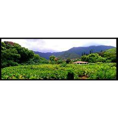 Native Hawaiian Plants (@native_hawaiian_plants) • Instagram photos and videos Hawaiian Plants, Mountains, Photo And Video, Videos, Nature, Photos, Travel, Instagram, Naturaleza