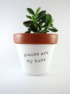 4 PLANTS are MY BUDS: hand painted terracotta pot clay Puns | Plant Puns | Plants are my buds | Succulent | Cactus | Planter