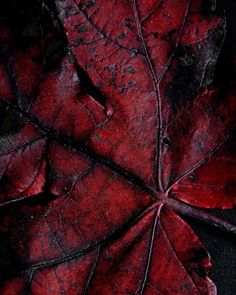 Marsala even in nature for 2015 Marsala, Dark Autumn, Dark Winter, Autumn Fall, Shades Of Burgundy, Burgundy Wine, Burgundy Color, Color Red, Blood Red Color