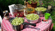 Fasters UrteHave: Stikkelsbær og Romtopf