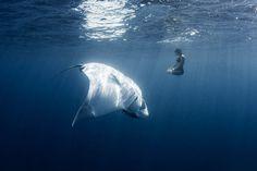 meditating-with-manta-ray