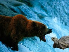 NativeLore: Turtle's Race With Bear