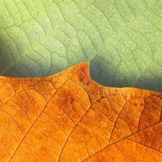Falling for SoCal by darkmatter, via Flickr leaves colors