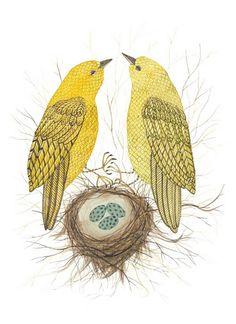 Yellow Warblers    Holly Ward Bimba, the artist behind Golly Bard,