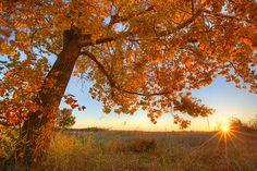 A beautiful fall backdrop