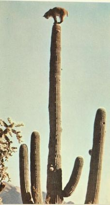 www.arizonasunshinetours.com How about a special personalized photo tour of the Sonoran Desert?