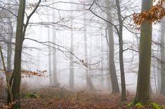 Nebel im herbstlichen Laubwald  - Gerade gefunden auf http://ronni-shop.fineartprint.de