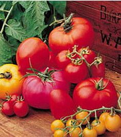 Tomato Growing Tips And Facts