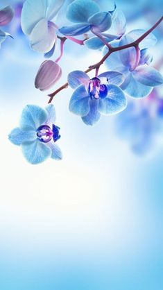 Wall Paper Blue Flowers Nature 35 New Ideas Flower Background Wallpaper, Flower Backgrounds, Nature Wallpaper, Wallpaper Backgrounds, Iphone Wallpaper, Wallpaper Desktop, Screen Wallpaper, Mobile Wallpaper, Hd Iphone Backgrounds