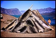 Inuit tent made from Seal skins. The traditional shelter used during the summer. American Spirit, Native American Art, Alaska, Inuit People, Tlingit, Inuit Art, Vernacular Architecture, Arctic Circle, Best Places To Live