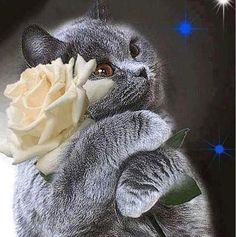 Cat with white Rose Kittens Cutest, Cute Cats, Animals Beautiful, Cute Animals, Rose Delivery, Image Chat, White Roses, Pixel Art, Good Morning