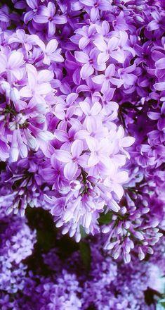 New wallpaper iphone purple flowers beautiful 57 Ideas