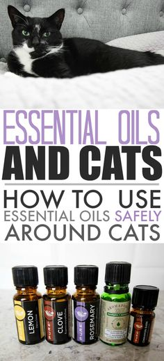 Essential oils and cats are sometimes not the best combo. In fact, while some essential oils are great for dogs, they've been shown to be highly toxic to cats in some circumstances. Here are some safe ways for you to still enjoy using essential oils at home without harming your furry friends. #Pets #EssentialOils #EssentialOilsAndCats