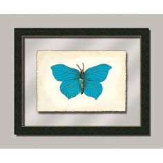 Melissa Van Hise Butterfly lll Framed Graphic Art