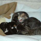 Kitten progression photos to help you determine kitten ages