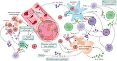 Immune mechanisms in malaria: new insights in vaccine development
