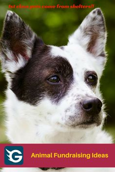 1st class pets come from shelters!!  #petfundraising #fundraising  Create your online fundraising campaign at http://gogetfunding.com