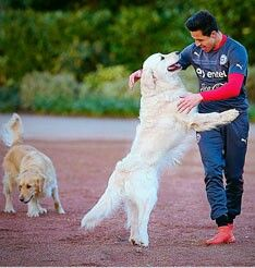 Alexis Sanchez trains with his dogs at Arsenal's London Colney base Alexis Sanchez is pictured with his two dogs Atom and Humber during training with Chile on… Titanic Music, London Colney, Alexis Sanchez, Arsenal Fc, Arsenal Football, Gareth Bale, European Football, Great Team, Lionel Messi