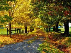 Autumn...I want a driveway that looks like this...I love fall time.
