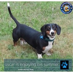 We love to hear from our previous adopters and the other day we received an email with news from Oscar! This little guy was just a pup when he came to DRBC. Now he is all grown up and is out enjoying his Summer.
